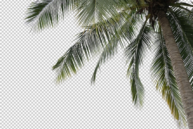 Coconut palm tree foreground isolated Premium Psd