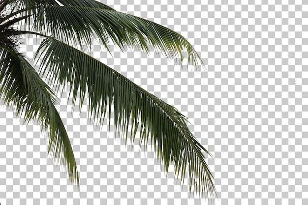 Coconut tree foreground Premium Psd