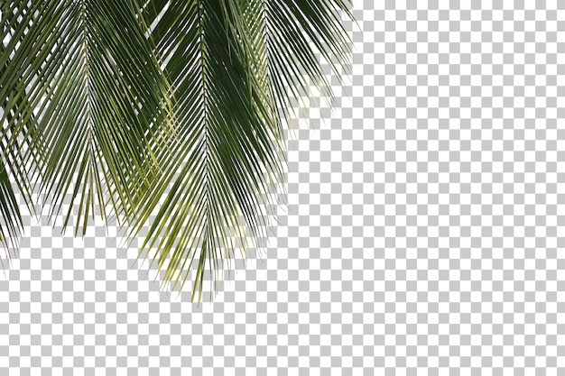 Coconut tree leaves foreground isolated Premium Psd