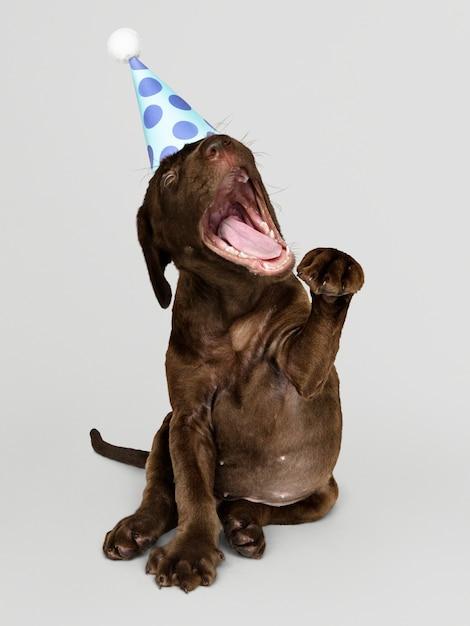 Cute labrador retriever puppy with a party hat Free Psd