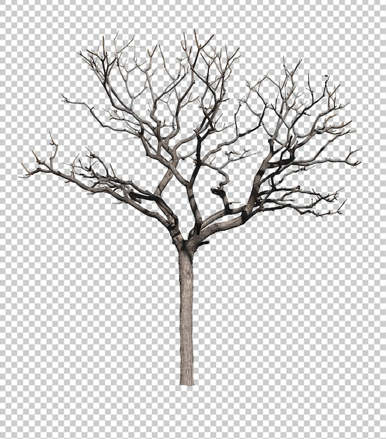Dark tree without leafs isolated against white background Premium Psd