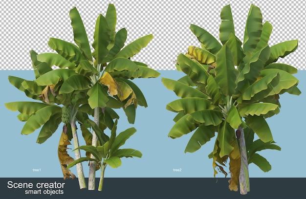 Различные типы бананового дерева 3d-рендеринга Premium Psd