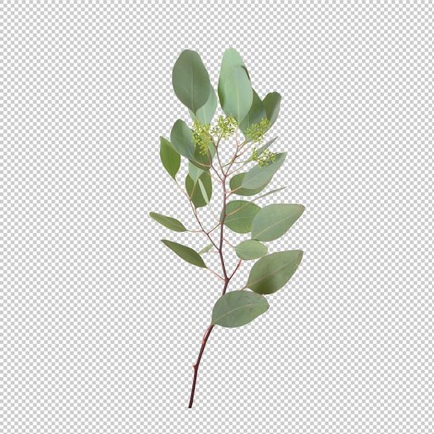 Eucalypthus leaves isolated Premium Psd