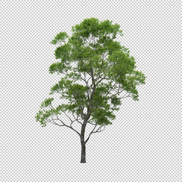 Eucalyptus tree with isolated background, tree 3d render Premium Psd