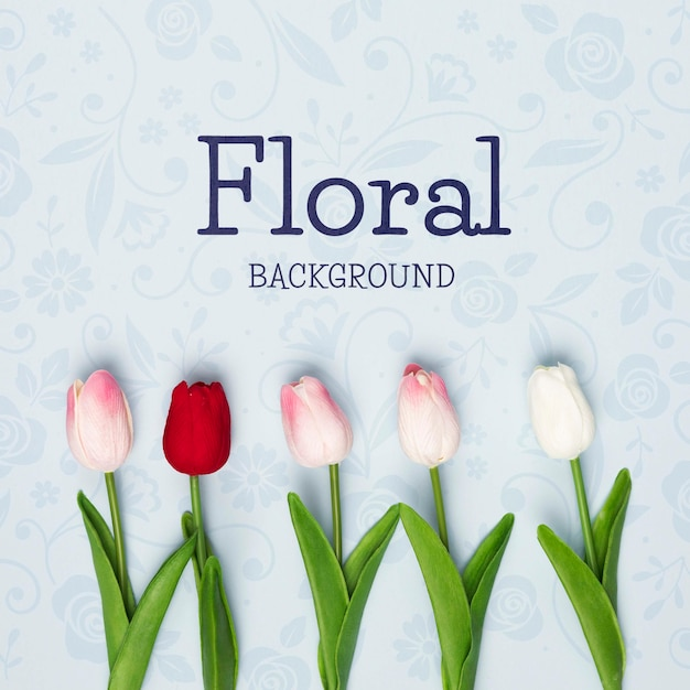 Flat lay of spring tulips Free Psd