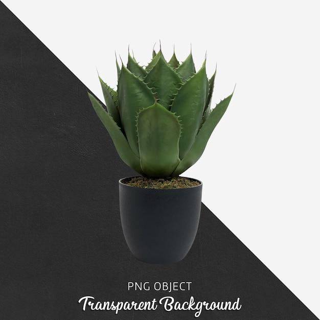 Flower on transparent background Premium Psd
