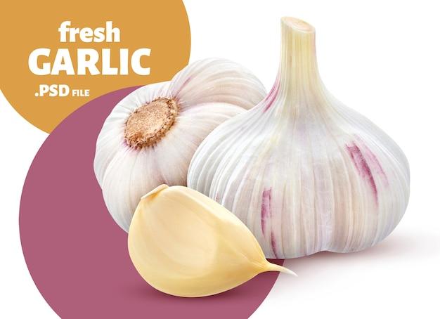 Fresh garlic vegetable isolated, banner Premium Psd