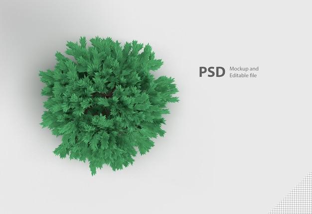 Зеленое растение изолированное Premium Psd
