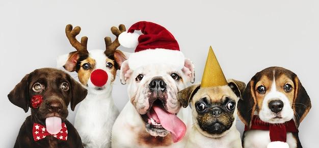 크리스마스를 축하하기 위해 크리스마스 의상을 입고 강아지의 그룹 무료 PSD 파일