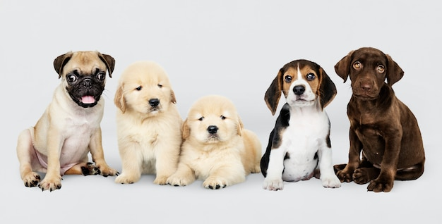Group portrait of five adorable puppies Free Psd