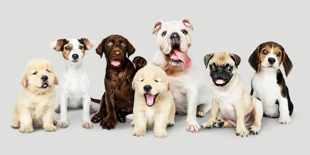 사랑스러운 강아지의 그룹 초상화 무료 PSD 파일