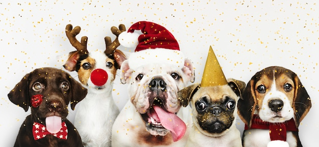 Group of puppies wearing christmas costumes to celebrate christmas Free Psd