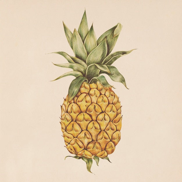 Illustration of pineapple in watercolor style Free Psd