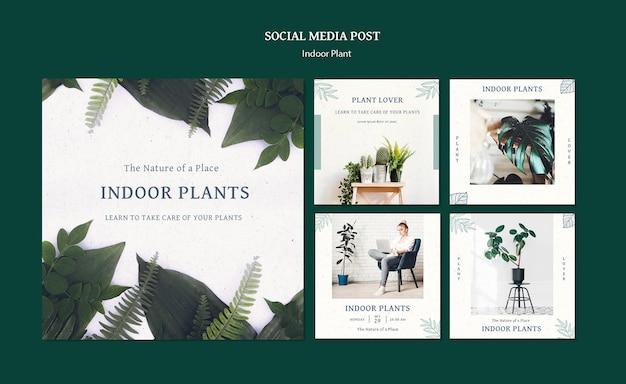 観葉植物ソーシャルメディアの投稿 Premium Psd