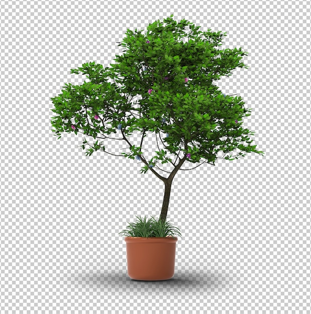 Isolated tree. transparent wall. front view. Premium Psd