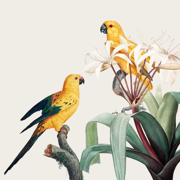 Macaw tropical illustration Free Psd