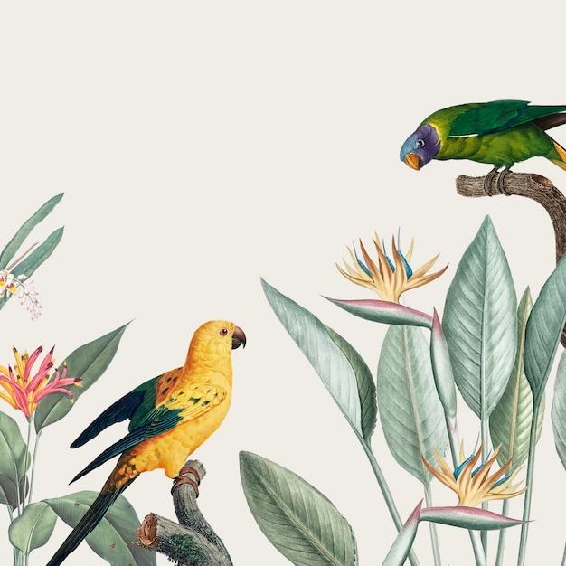 Ара тропическая иллюстрация Бесплатные Psd