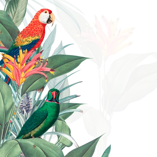Macaw tropical mockup illustration Free Psd