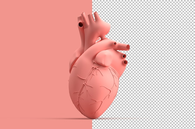 Minimalistic illustration of human heart Premium Psd