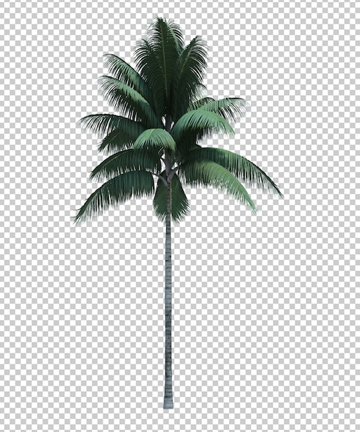 Nature object coconut tree isolated white Premium Psd