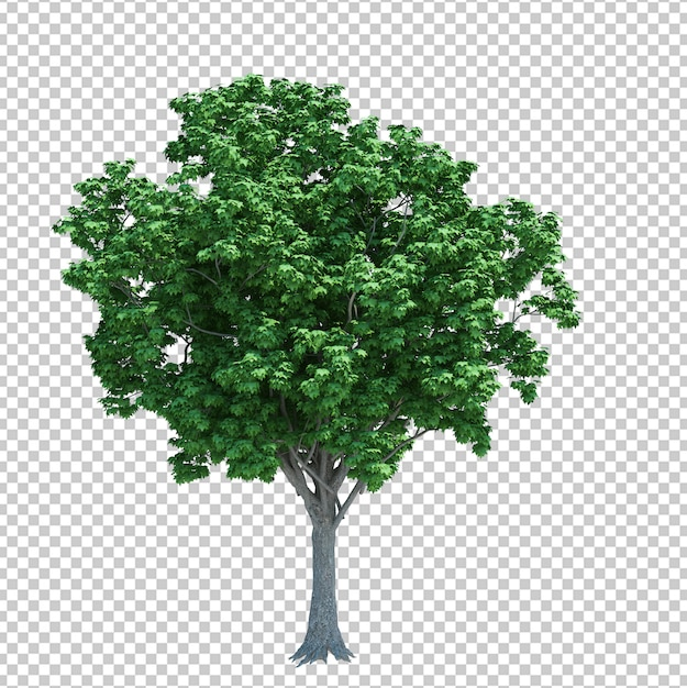 Nature object tree isolated on white Premium Psd