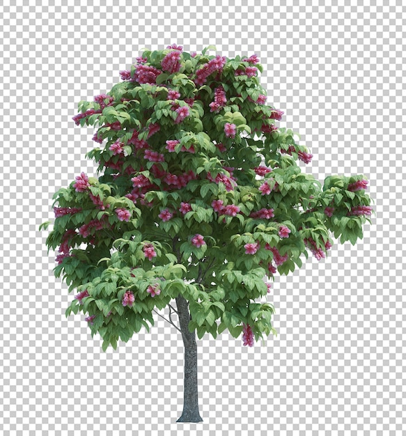 Nature object tree isolated Premium Psd