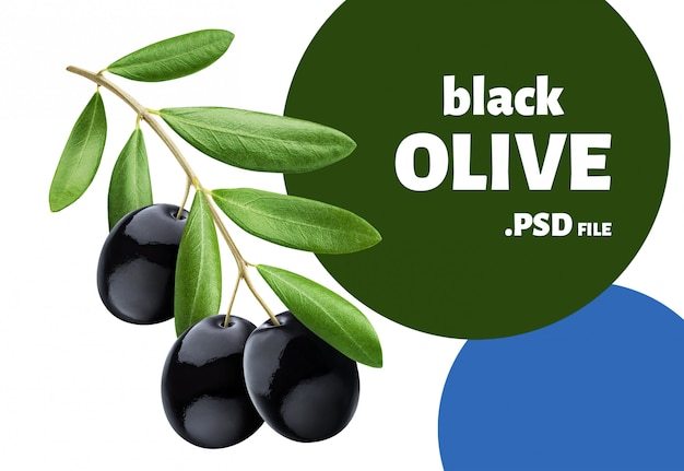 Olive tree branch with black olives isolated on white Premium Psd