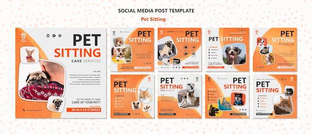 애완 동물 앉아 개념 소셜 미디어 게시물 템플릿 프리미엄 PSD 파일