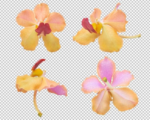 孤立した透明性にピンクオレンジの蘭の花。花。 Premium Psd