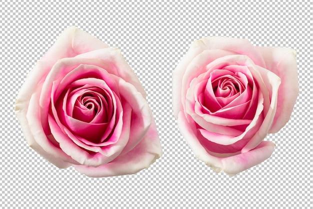分離されたピンクのバラの花 Premium Psd