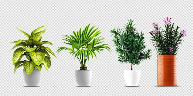 Цветочные растения в горшках в 3d визуализации Premium Psd