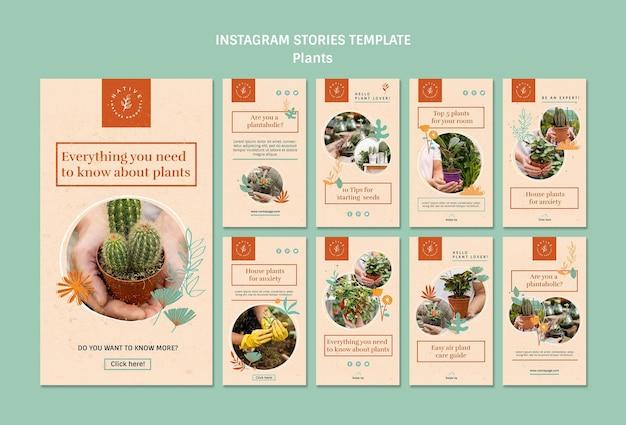 Шаблон рассказов растений instagram Бесплатные Psd