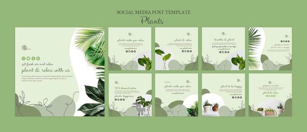Шаблон сообщения в социальных сетях про растения Бесплатные Psd