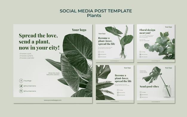 Сообщение plants в социальных сетях Бесплатные Psd