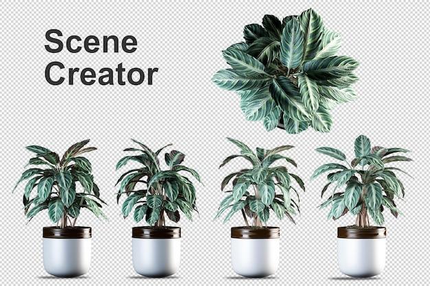 Комнатные растения в 3d-рендеринге изолированные Premium Psd