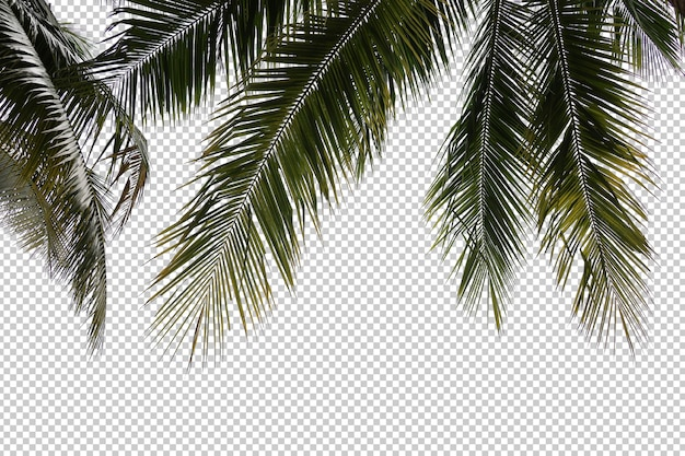 Realistic coconut palm tree foreground Premium Psd