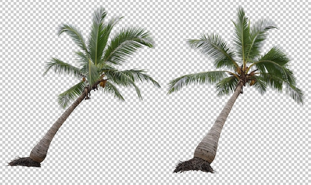 Realistic coconut palm tree set isolated Premium Psd