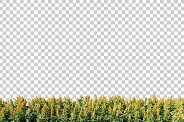 分離された現実的な顕花植物の前景 Premium Psd