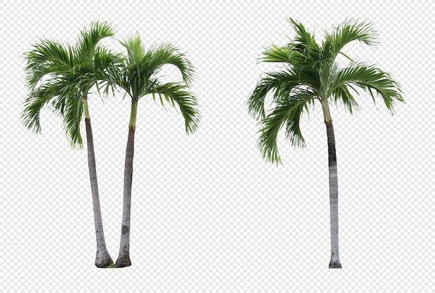Realistic manila palm tree set isolated Premium Psd