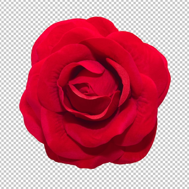 Red rose flowers on isolated transparency background Premium Psd