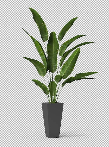 Render of isolated plant. isometric front view. transparent wall. premium 3d. Premium Psd