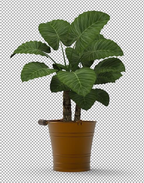 孤立した植物のレンダリング。等尺性フロントビュー。透明な壁。プレミアム3d。 Premium Psd