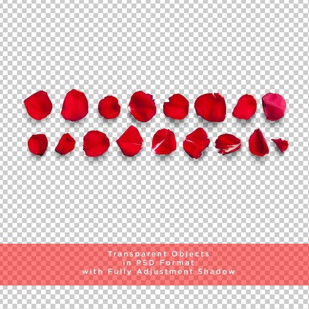 Rose petals collection on transparent layer Premium Psd