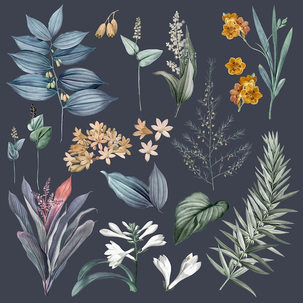 Set of flowers and plant illustrations Free Psd