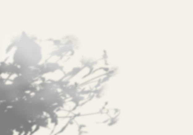 The shadow of an exotic plant on a white wall. Premium Psd