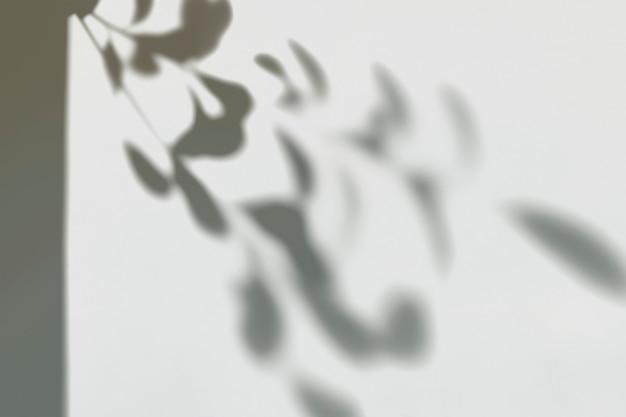 벽에 나뭇잎의 그림자 무료 PSD 파일