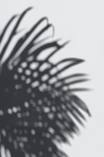 Shadow of palm leaves on a white wall Free Psd