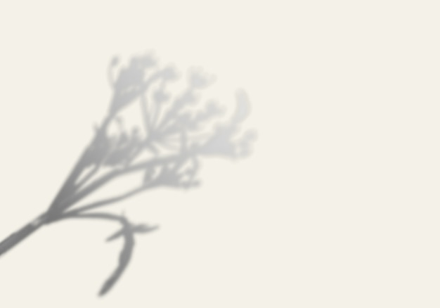 The shadow of a tree on a white wall. Premium Psd