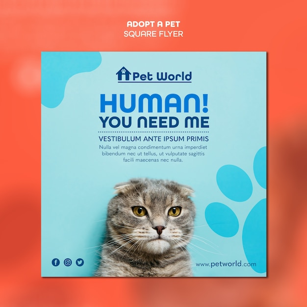 고양이와 애완 동물 입양을위한 사각형 전단지 서식 파일 무료 PSD 파일