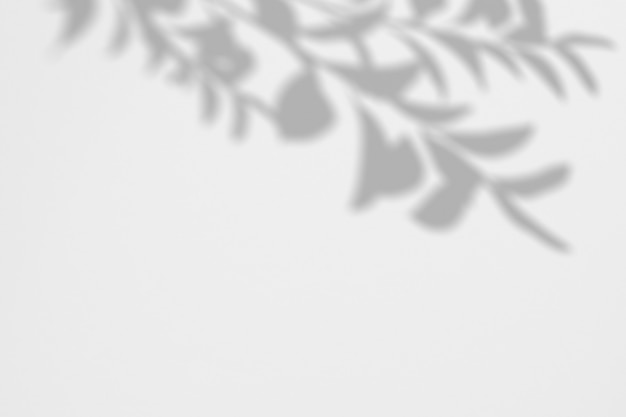 Summer background of shadows branch leaves on a white wall Premium Psd
